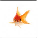 Agoldfish's Photo
