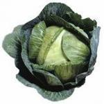 Lettuce's Photo